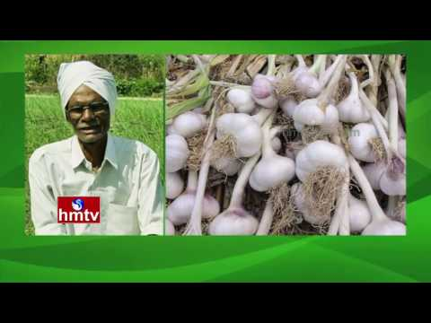 Success Story Of Garlic Cultivation Farmer | Natural Farming | RR Dist | Nela Talli | HMTV