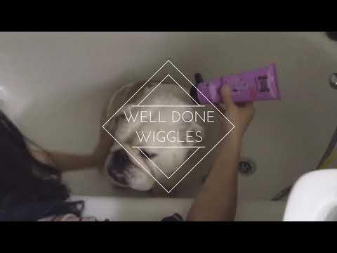 OCD collectibulldogs youtube mission