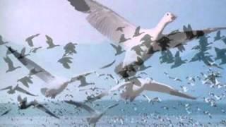 موسيقى رائعة للموسيقار اليوناني نيكوس-beginning belalim