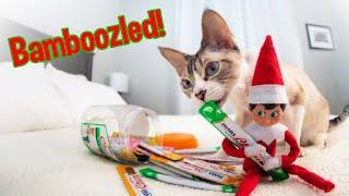 Elf on the Shelf Texts Cat!