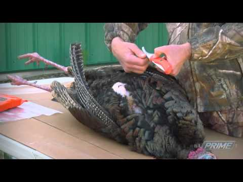 Easily Field Dress A Wild Turkey! How To Quickly Remove The Breast Meat (#231A) @GrowingDeer.tv