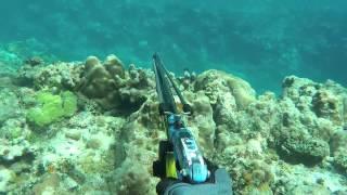 Guam spearfishing