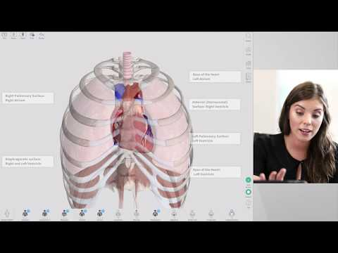New Features of Complete Anatomy 2018 | Live - YouTube