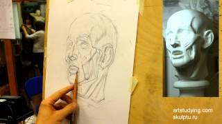 Экорше (2). Обучение рисунку. Портрет. 31 серия