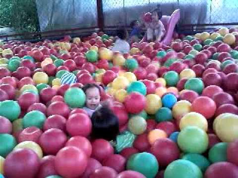 Chíp chơi trong nhà bóng ở Vườn bách thú