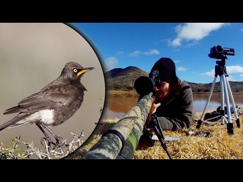 109 Yard Starling DEMOLITION! - Long Range PCP Airgun Hunting