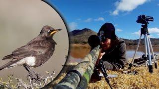 109 Yard Starling Demolition! - Long Range Pcp Airgun Hunting