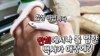 만화에서나 볼법한 새하얀 아기뱀. 진짜 너무귀엽습니다ㅎ…