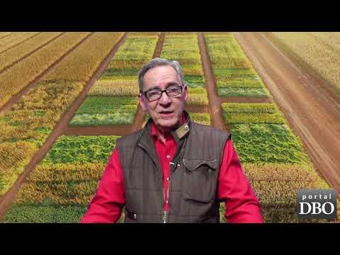 Agro DBO de setembro mostra como fazer agricultura no capricho