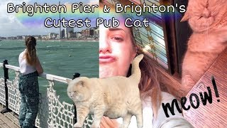 Brighton Pier & Brighton's Cutest Pub Cat