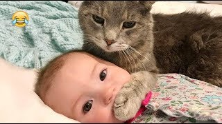 Funny Baby anh Cats  Video 2019