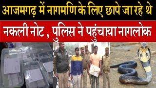 आजमगढ़ में नागमणि के लिए छापे जा रहे थे नकली नोट , पुलिस ने पहुंचाया नागलोक
