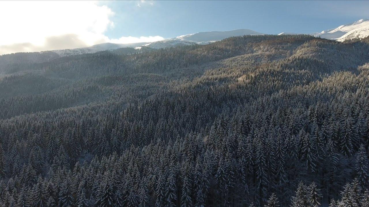 Зимові Карпати, Драгобрат (Дрон) / Winter Carpathian Mountains, Dragobrat