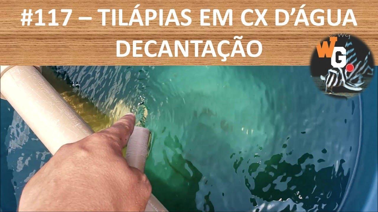 Criação de Tilápias em Caixa D'Água - Decantação - EP002 - #117