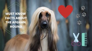 Getting To Know Your Dog's Breed: Afghan Hound Edition