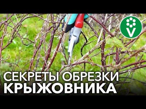 Правильная ОБРЕЗКА КРЫЖОВНИКА для крупных и здоровых ягод!