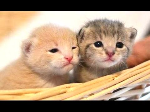 Thumbnail: Cute Kittens Compilation 2015 [NEW]