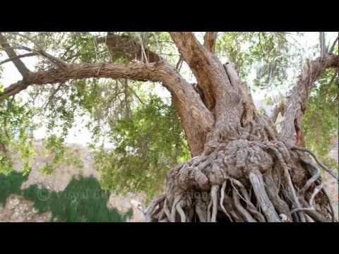 RAK- Tree of Life