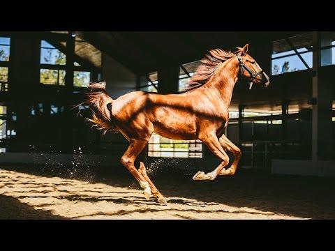 HORSES & WINE!