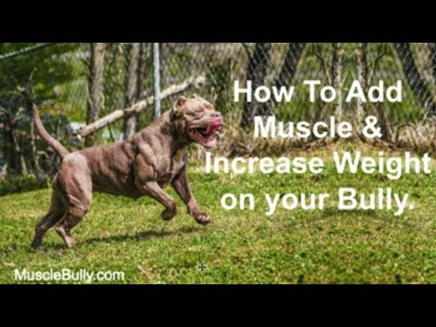 Muscle Building Secrets for Your Bully Dog: How To Build Healthy, Solid Muscle On Your Bully Today.