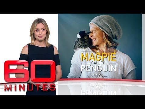 A magpie called Penguin: Part two - How a quirky little bird saved a family | 60 Minutes Australia