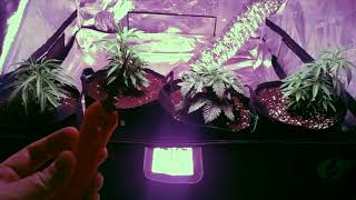 UPDATE On 4X4, Clone wars and topping.
