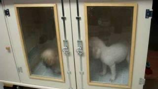 Um banho agradável - Personal Dog