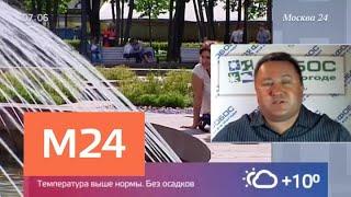 Смотреть видео Синоптики предупредили о повышенной угрозе природных пожаров - Москва 24 онлайн