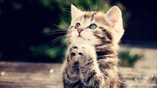 кошки/cats vol.2