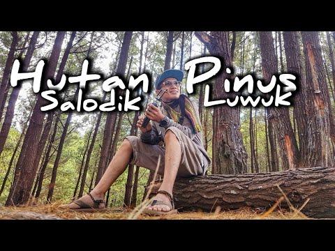 wisata-alam-hutan-pinus-salodik-luwuk---kabupaten-banggai---sulawesi-tengah