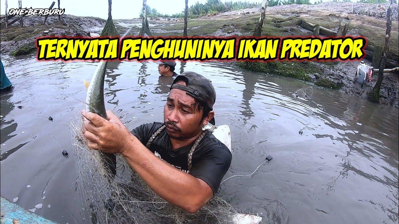 Download MUKAT IKAN , GAK NYANGKA DAPAT IKAN BULAN BULAN BESAR