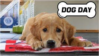 ESPN Dog Day Preshow: Meet the Breeds