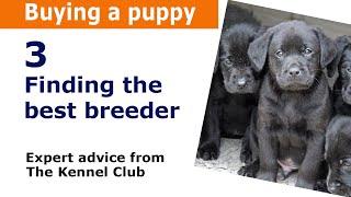 How to find a good dog breeder. Kennel Club Assured Breeder's Scheme