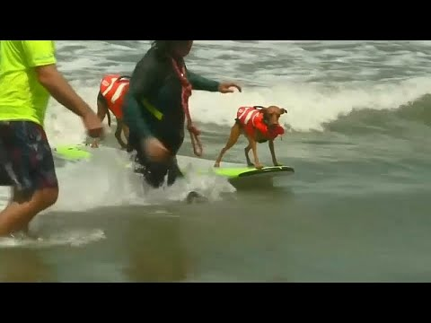 شاهد: البطولة الثالثة لركوب الأمواج للكلاب بكاليفورنيا…  - 20:21-2018 / 8 / 5