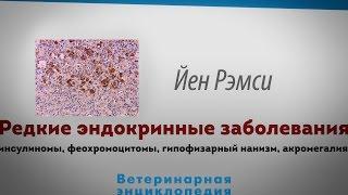 Редкие эндокринные заболевания домашних животных. Unusual endocrinopathies