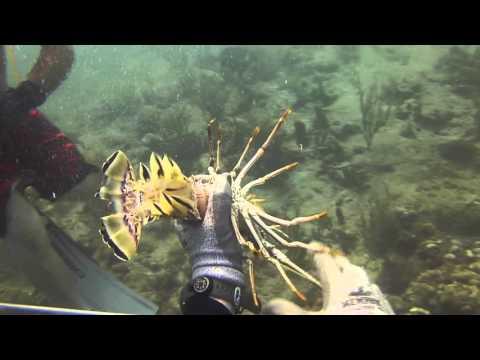 Hookah Dive South Florida - Lobster