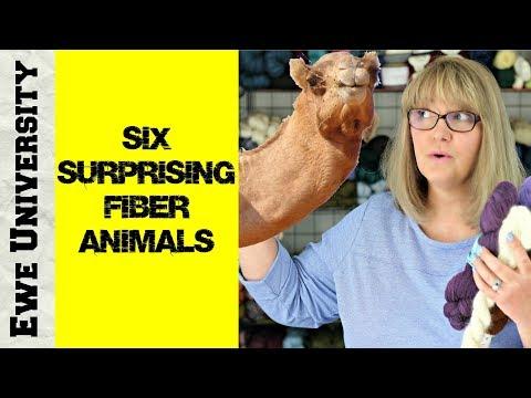 SIX SURPRISING FIBER ANIMALS