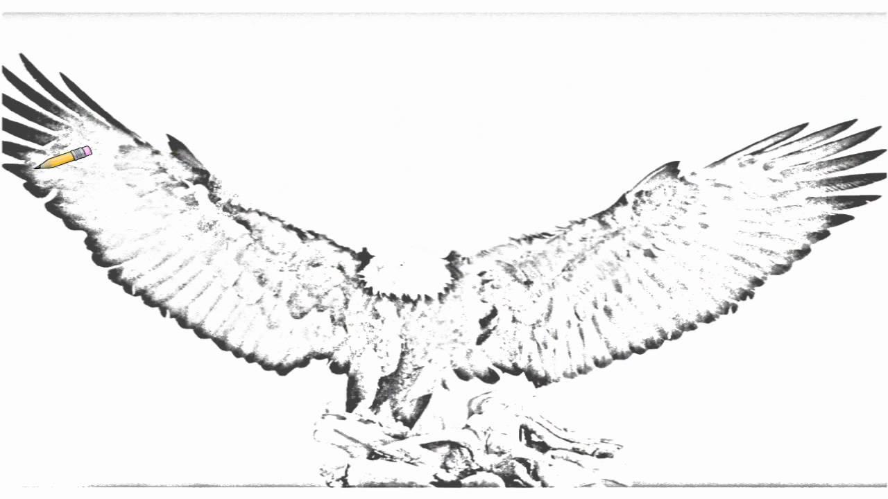 auto draw 2  bald eagle  kachemak bay  kenai peninsula  alaska
