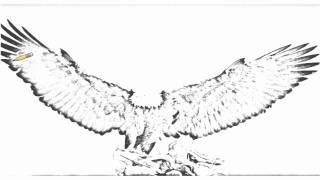 Auto Draw 2: Bald Eagle, Kachemak Bay, Kenai Peninsula, Alaska