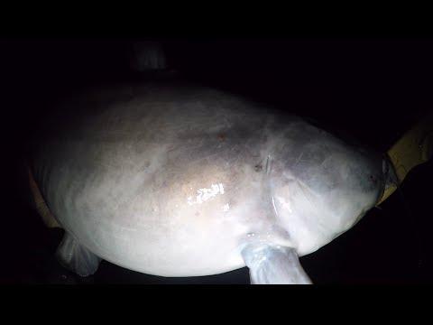 Fishing The Creek At Night For Catfish - Creek Fishing For Catfish