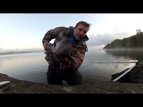 Huge Salmon caught Fishing from Shore, casting spoons - 2017
