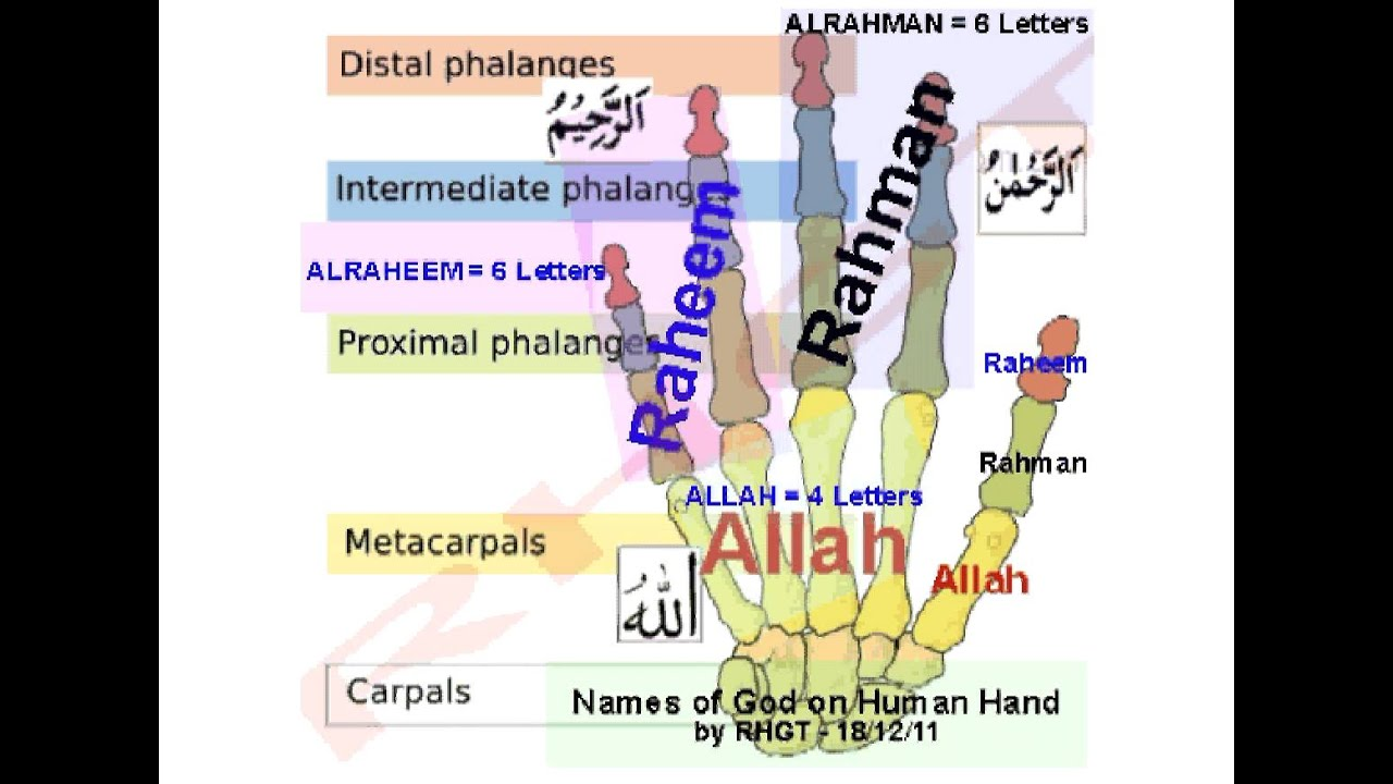 Name of Allah on Human Hand Anatomy - YouTube
