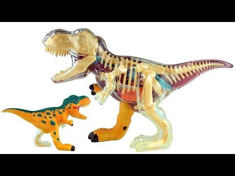 X-ray Fun Tyrannosaurus Rex - 3D Puzzle T-Rex Dinosaur Model - 3D Dinosaurs Speed build