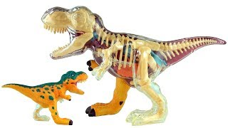 X-ray Fun Tyrannosaurus Rex - 3D Puzzle T-Rex Dinosaur Model - 3D Dinosaurs Speed build