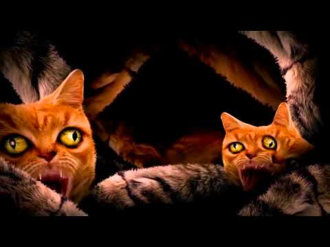 Run The Jewels - Meowpurrdy feat. Lil Bub, Maceo, Delonte (Official Music Video)