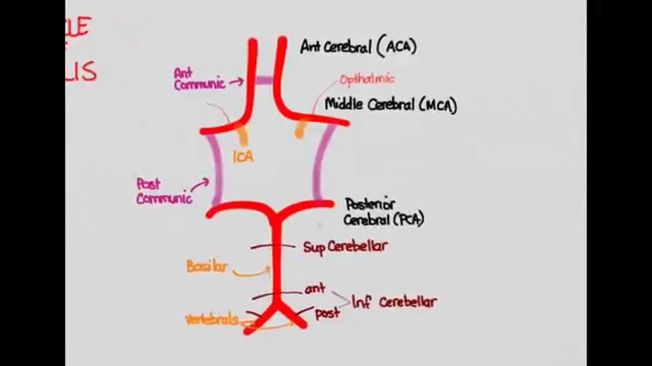Ischemic Stroke 02: Anatomy - YouTube