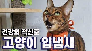 [ENG SUB] 고양이 입냄새 맡아본 사람은 그냥 들…