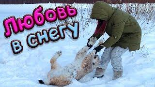 ЛЮБОВЬ В СНЕГУ / Рыси и пума получают снежный душ