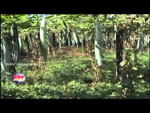 Video terrace farming in kottayam vadavathoor for Terrace krishi