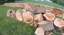 #24 Free Firewood Score